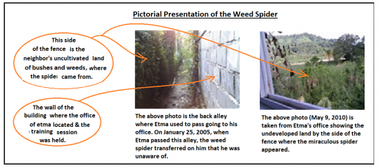 2005 weed spider incident_1.png